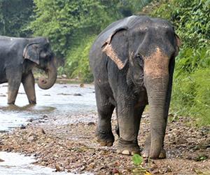 sanctuaires-elephants-thailande-asie-ethika-siam-ethique