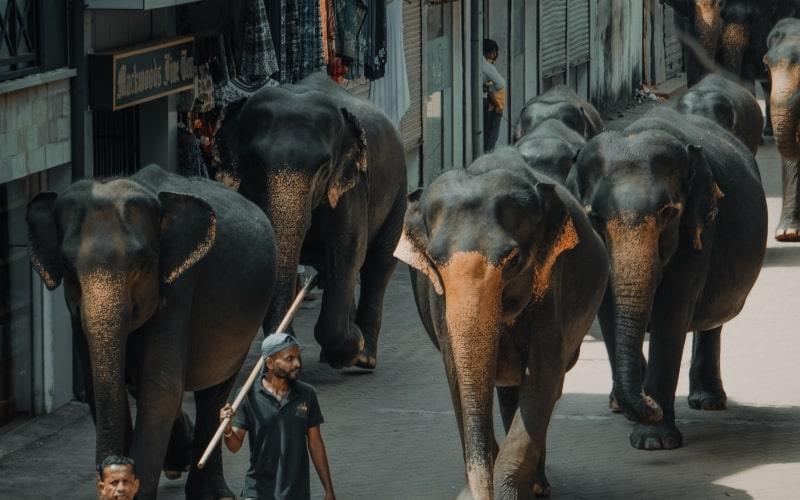 15 faits que vous ignoriez sur les éléphants en Thaïlande